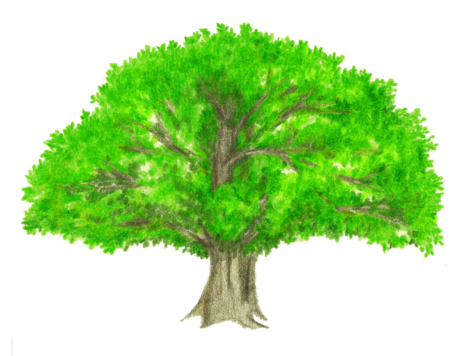 仏教の三大聖樹(無憂樹・印度菩提樹・沙羅双樹)とはどんな木なの ...